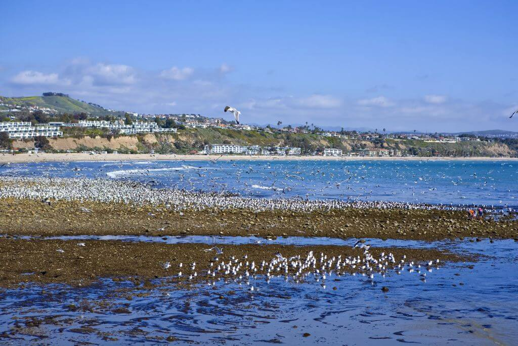 Doheny at low tide